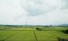 'Án oan' phóng xạ của hạt gạo Fukushima