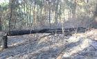 Nỗ lực chữa cháy rừng, hạt phó kiểm lâm hy sinh