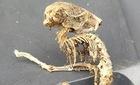 Phát hiện bộ xương của sinh vật kỳ quái