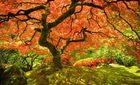 Lặng người trước vẻ đẹp của mùa thu khắp thế giới