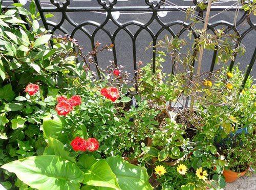 ban công, trồng hoa, vườn treo