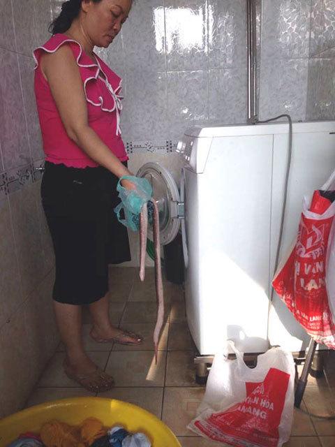 Thò tay vào máy giặt, kinh hoàng khi sờ trúng... rắn hổ