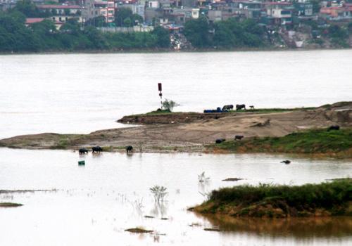 Những biệt khu đặc sản phù sa ở bãi sông Hồng
