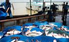 Nguy cơ độc quyền, thao túng xuất khẩu cá tra vào Nga