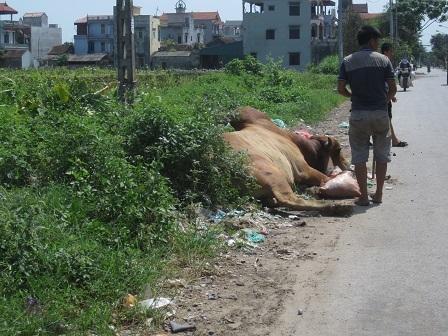"""Tử khí ám """"lãnh địa"""" mổ trâu bò lớn nhất Hà Nội"""