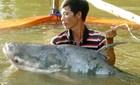 Săn cá khủng giá chục triệu ở miền Tây