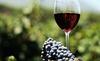 Chuyên gia rượu vang chết ngập trong thùng rượu