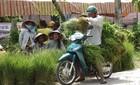 Chợ cỏ họp giữa trưa độc nhất vô nhị ở miền Tây
