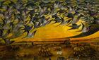 Bí ẩn diệt vong của đàn chim hàng tỷ con