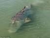 Xuất hiện cá mú 'khổng lồ' dài gần 3 mét