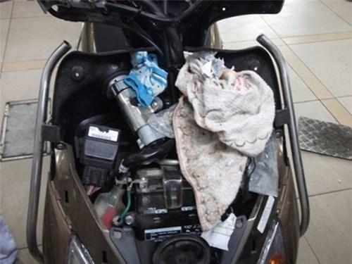 Cháy xe máy vì chuột: Thảm họa ít để ý