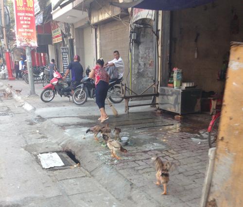 Hà Nội nuôi gà vỉa hè, kỹ năng thời bao cấp trỗi dậy
