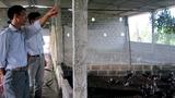 Tỷ phú vịt trời: Chuyện khó tin ở Bắc Giang