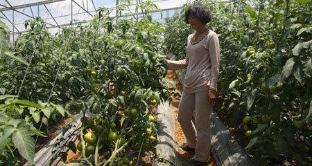 Nông-sản, siêu-thị, nông-dân, công-tư, an-toàn-vệ-sinh, thực-phẩm, metro, chuỗi-cung-ứng
