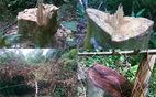 Kiểm điểm nhiều tập thể, cá nhân để xảy ra phá rừng