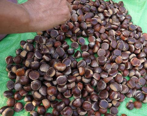 Hạt dẻ Trùng Khánh Cao Bằng tại TPHCM