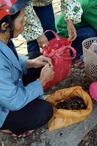 hạt dẻ, Trùng Khánh, Cao Bằng