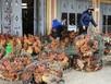 Gà miền Nam ngập tràn chợ Bắc