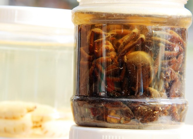 côn-trùng, Campuchia, rắn, rết, đuông-dừa,