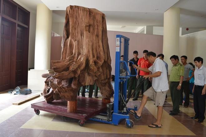 gốc-sưa, gỗ-sưa, siêu-phẩm, đồ-gỗ, Quảng-Bình, gỗ-quý, cây-rừng, đại-ngàn