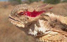 10 cơ chế tự vệ quái dị nhất thế giới động vật