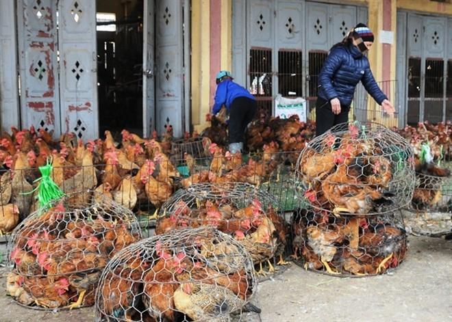 cam-Vinh, gạo-độc, tẩm-hóa-chất, nem-tại, vệ-sinh, tăng-trọng, thịt-lợn, chất-cấm, gà, thương-lái, Trung-Quốc, xăng, chỉ-số-tiêu-dùng