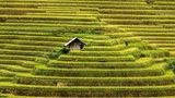 Túp lều Việt trên ruộng lúa khiến du khách mê đắm