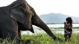 Chuyện bé gái Việt huấn luyện voi lên báo Anh