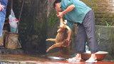 Cảnh cắt tiết chó trên phố Hà Nội lên báo Anh