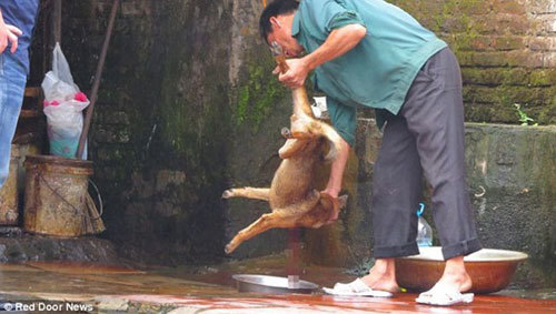 Can Dogs Eat Pig Skins