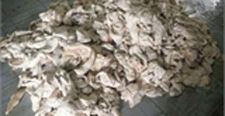 lòng-lợn, mỡ-thối, cá-khô, hóa-chất, tẩy-trắng, tăng-trọng, thịt-gà, xăng, dừa-xiêm, bữa-ăn