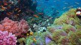 Rạn san hô Việt Nam đứng trước nguy cơ biến mất