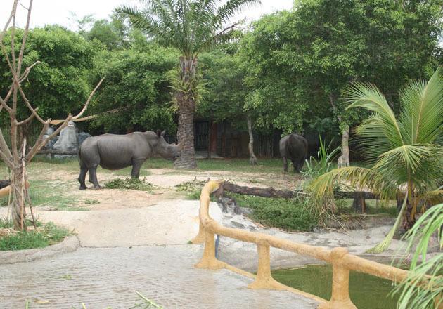Hổ, voi, tê giác trong vườn Đại Nam của ông Dũng Lò Vôi