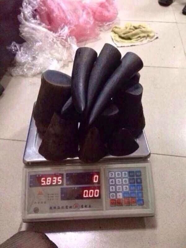 'Kho' sừng tê giác trong nhà đại gia Hà Tĩnh