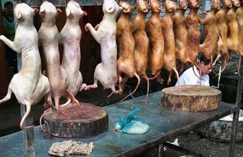 Nhà hàng đầu tiên ở Mỹ được bán thịt chó?