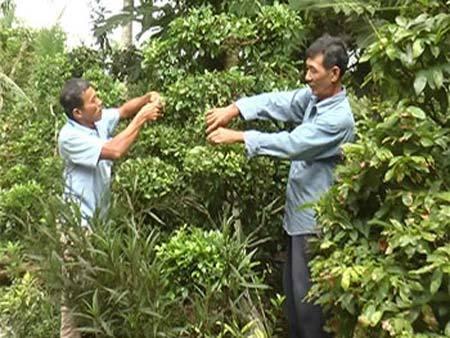 Thành triệu phú bonsai từ bài học vỡ lòng về cây cảnh