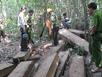 Đình chỉ 7 cán bộ kiểm lâm, khởi tố vụ án phá rừng