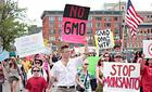 Báo Nhật: Cảnh báo Việt Nam về ngô biến đổi gen