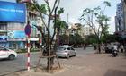 Hà Nội: 3,5 tỉ đồng thay thế 200 cây xanh trên phố