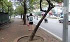 3,5 tỷ trồng 200 cây xanh vỉa hè: Hà Nội chơi hoang?
