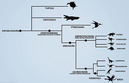 Rùa có họ hàng với chim