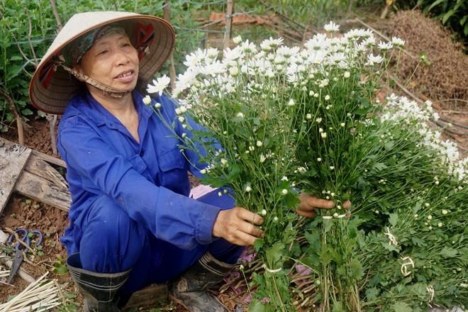 Hà Nội sốt cúc họa mi, Sài Gòn chuộng cây úp ngược