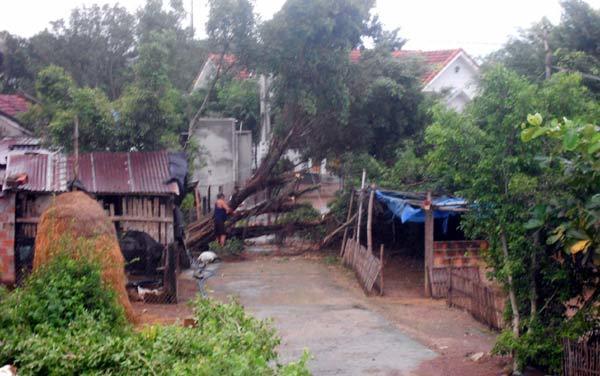 bão số 4; Phú Yên; Đồng Xuân