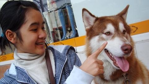 Thịt chó, Hoàng Xuân,