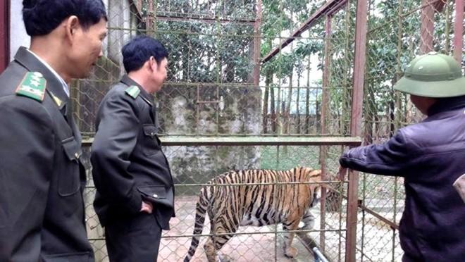 Trại hổ dữ lớn nhất Việt Nam của đại gia Thanh Hóa
