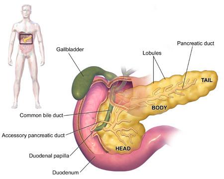 Ung thư tuyến tụy - sát thủ thầm lặng