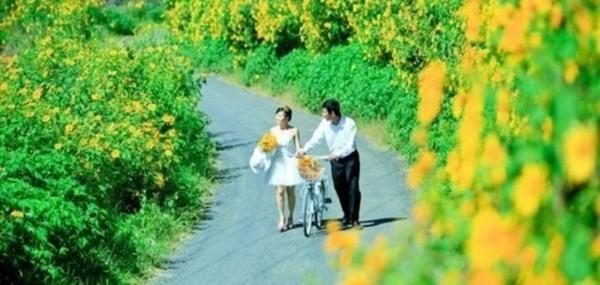 5 cánh đồng hoa đẹp mê hồn trên khắp đất nước
