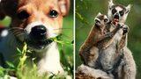 Động vật cũng biết tự chữa bệnh giống người
