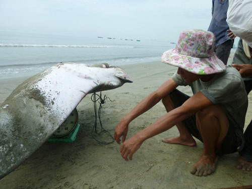 'Thủy quái' trăm triệu vào tay thợ săn Việt