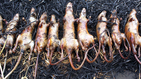 Cầu-Giẽ-Ninh-Bình, chuột-đồng, thịt-chuột, cao-tốc, đặc-sản, dân-dã, hun-khói, chế-biến, Nam-Định